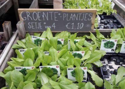 Groenteplanten2