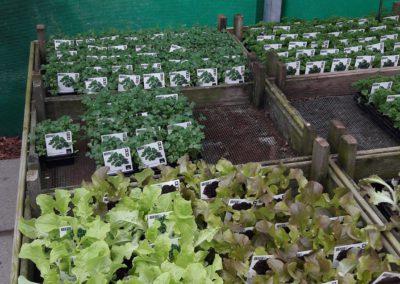 Groenteplanten3
