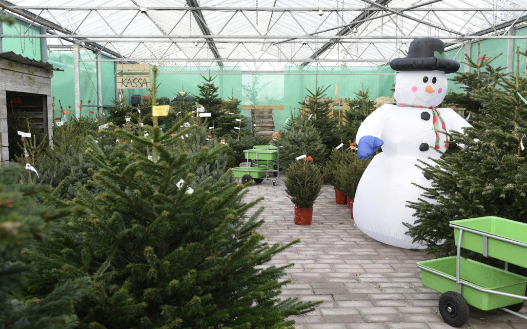 24 nov. Start verkoop kerstbomen
